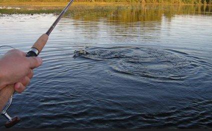 Где в туле ловится рыба?